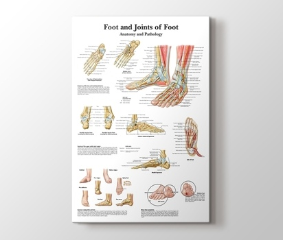 Foot And Joints Of Foot Chart Anatomy And Pathology Canvas Print