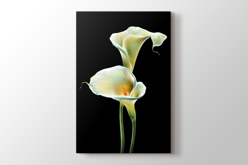 Picture of Lillies on Black
