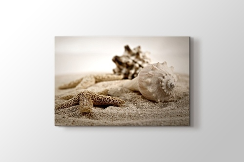 Picture of Shells on Sand