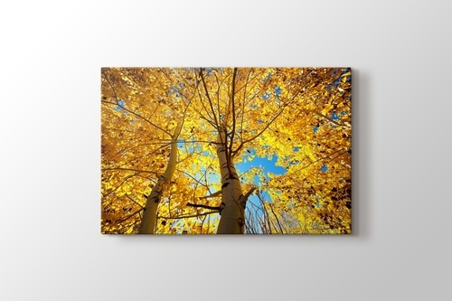 Picture of Autumn Trees