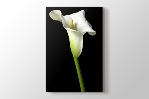 Picture of Cella Lilly on Black
