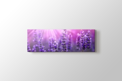 Picture of Lavender
