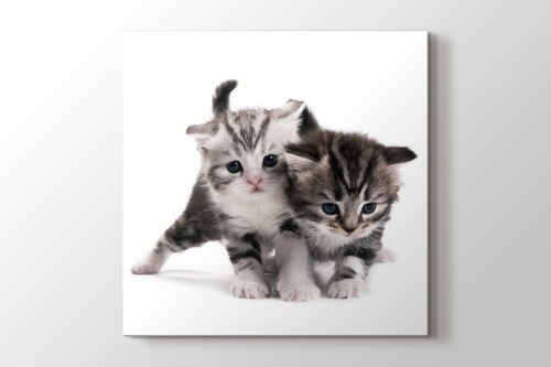 Picture of Pussy Cats