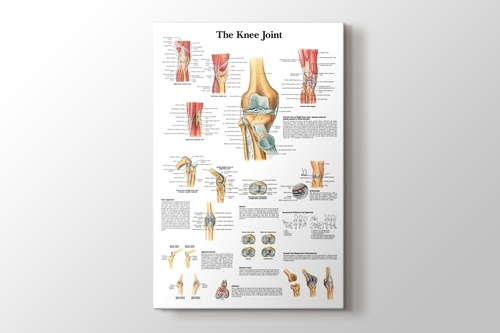 Picture of Knee Joint Chart