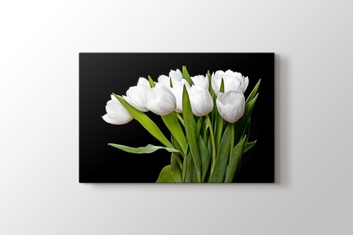 Picture of White Tulips
