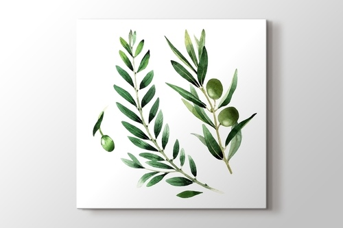 Picture of Olives