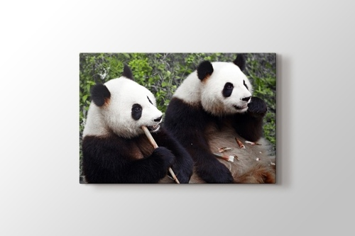 Picture of Eating Pandas