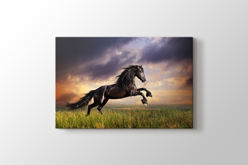 Picture of Black Friesian Horse