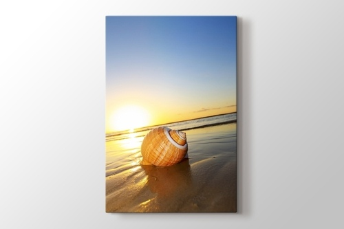 Picture of Sea Shell on Sand