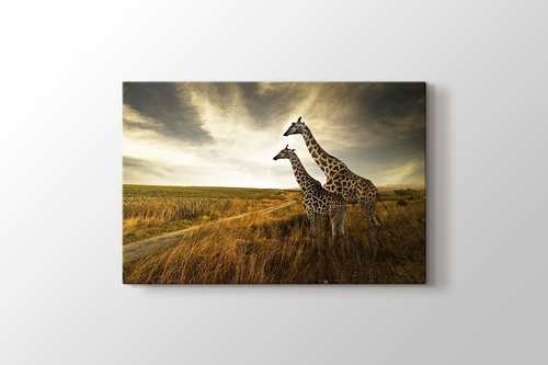 Picture of Giraffes