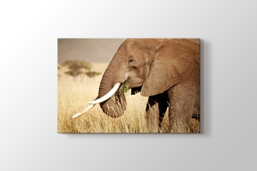 Picture of Elephant Eating