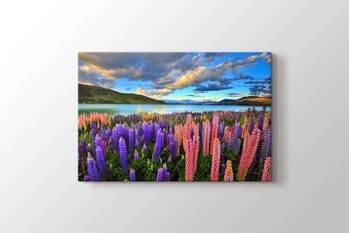 Picture of Lake Tekapo - New Zealand