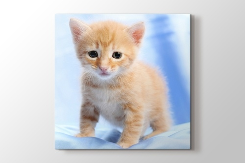 Picture of Pussy Cat