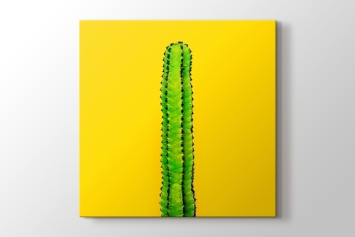 Picture of Green Cactus on Yellow