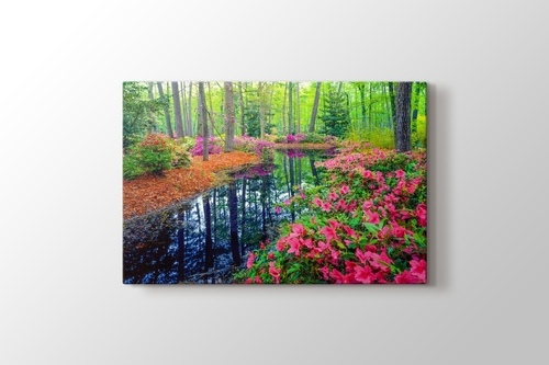 Picture of Spring Azalea Blossoms In Southern Woodland Garden