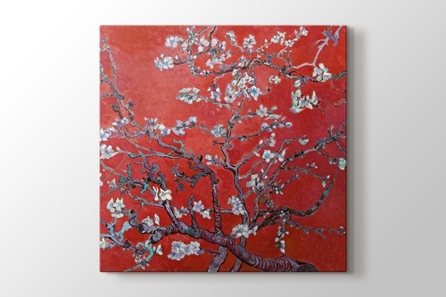 Picture of Blossoming Almond Tree