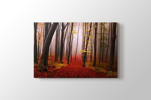 Picture of Autumn Forest Path