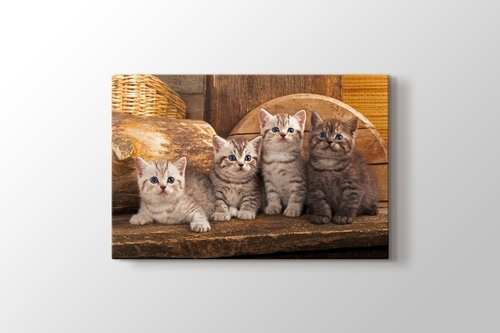 Picture of Little Cats