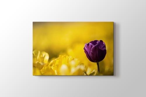 Picture of Purple Tulip