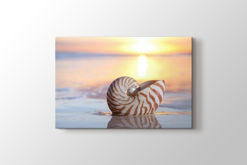 Picture of Sea Shell
