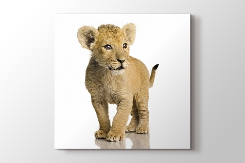 Picture of Beware of the Lion