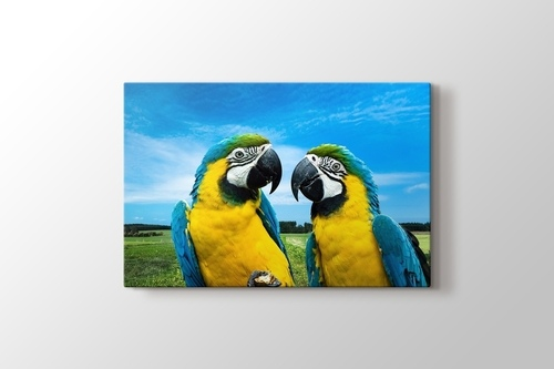 Picture of Parrots Chat