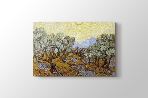 Picture of Olive Trees