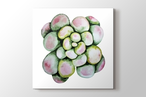 Picture of Succulent