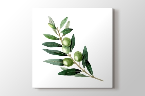 Picture of Olive