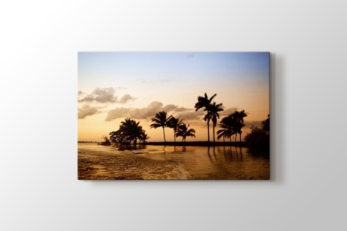 Picture of Palms in Ocean