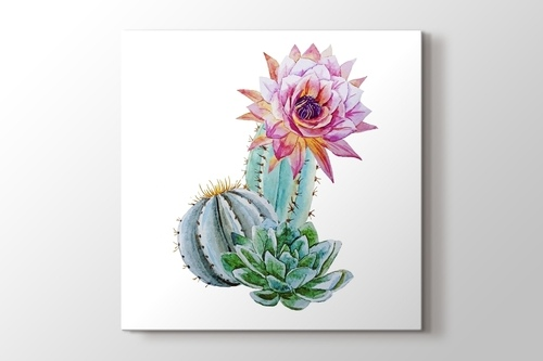 Picture of Beautful Cactus
