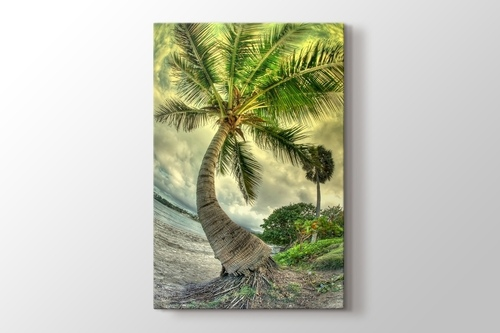 Picture of Palm on the Beach