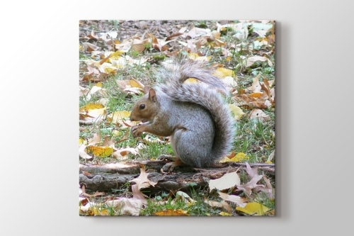 Picture of Squirrel at Central Park New York