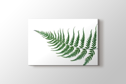 Picture of Fern Leaf