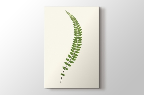 Picture of Fern