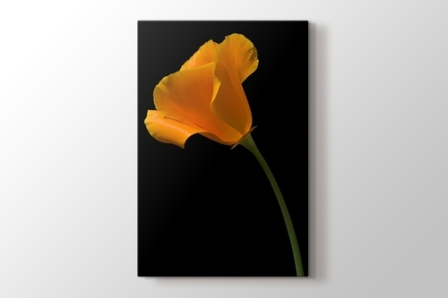 Picture of California Poppy