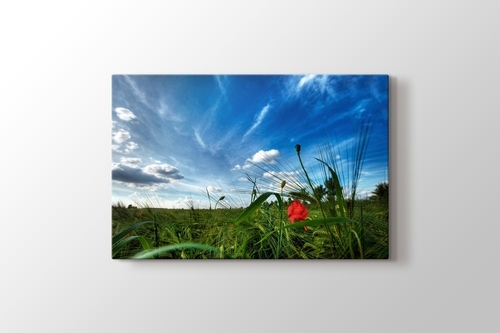 Picture of Poppies