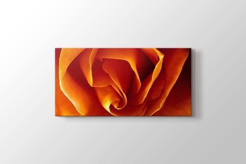 Picture of CloseUp Orange Rose