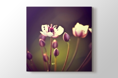 Picture of Spring Flower