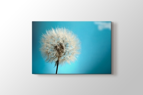 Picture of Dandelion