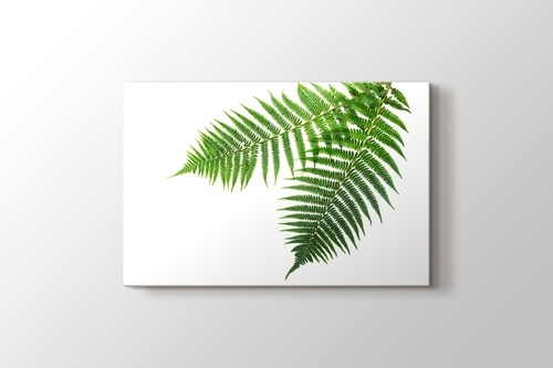 Picture of Spring Fern
