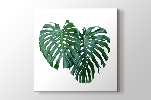 Picture of Monstera Leaves