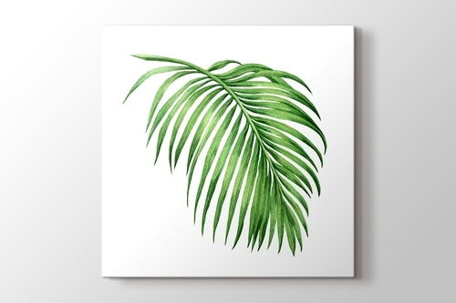 Picture of Palm