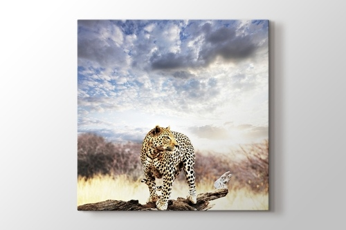 Picture of Leopard