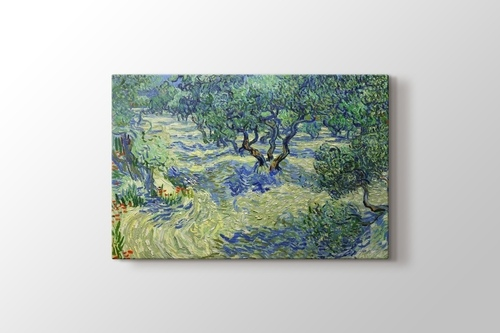 Picture of Olive Orchard