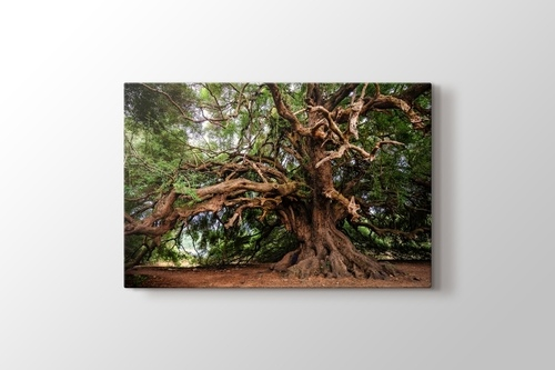 Picture of Big Tree