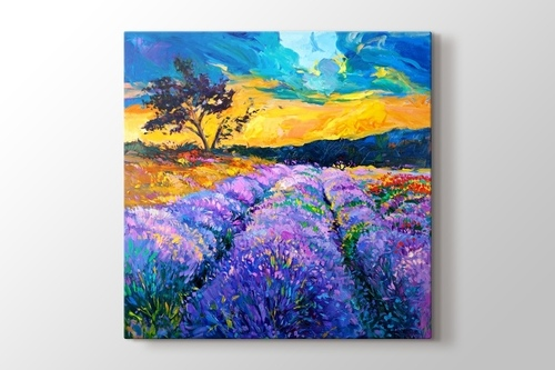 Picture of Lavender Field