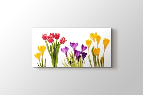 Picture of Colourful Flowers