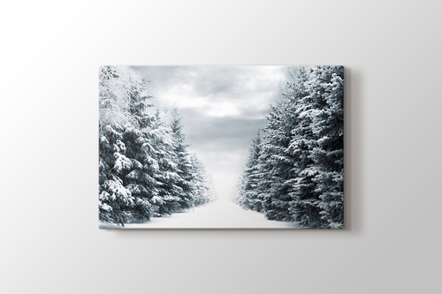 Picture of Snowy Road Between Trees