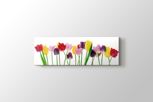 Picture of Spring Tulips